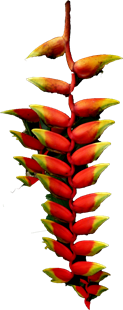 Ndola_flower_2
